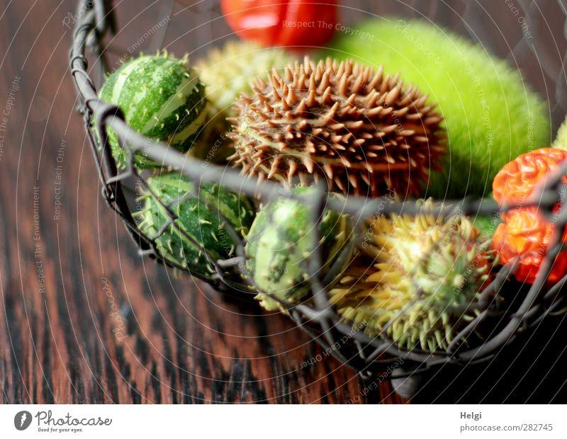 Herbstfrüchte Natur grün schön Herbst Holz grau klein Metall Stimmung braun liegen natürlich außergewöhnlich orange Frucht Ordnung