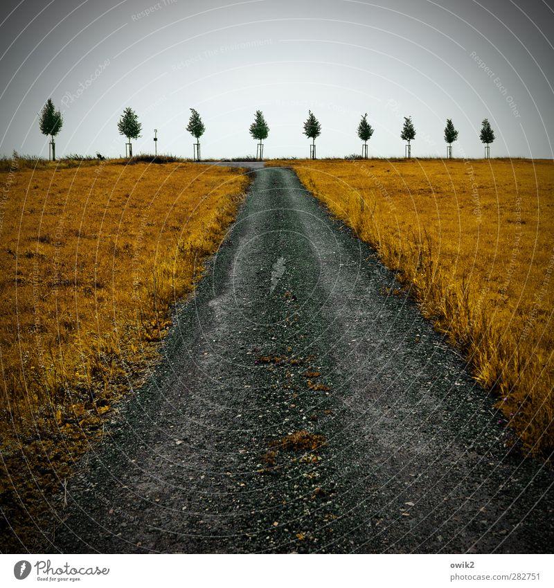 Spalier stehen Himmel Natur Pflanze Baum Wolken Umwelt Straße Gras Wege & Pfade Horizont Wachstum Textfreiraum Genauigkeit Vignettierung Jungpflanze