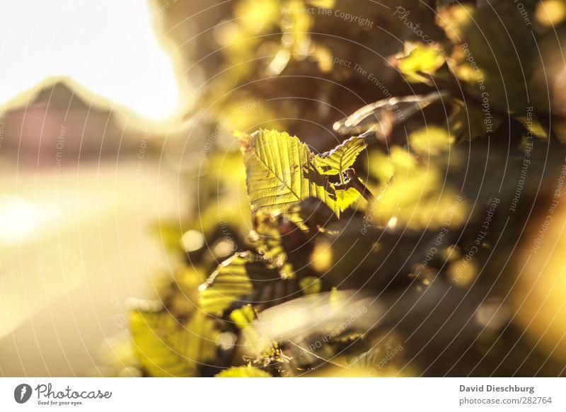 Herbstlicht Himmel Natur grün weiß Sommer Pflanze Baum Tier Blatt schwarz gelb Frühling glänzend Schönes Wetter Ast