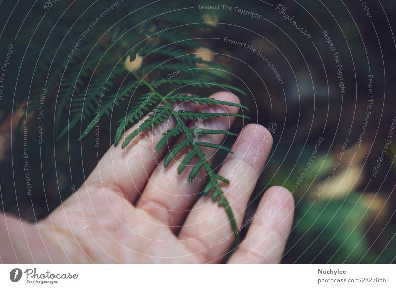 Hand hält grünes Blatt im Naturwald. schön Ferien & Urlaub & Reisen Winter Umwelt Pflanze Frühling Baum Wald Wachstum frisch nachhaltig natürlich Hintergrund