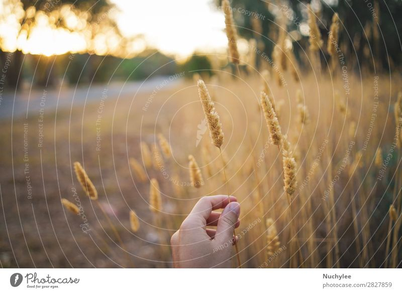Hand haltende Feldblume auf dem Feld schön Sommer Sonne Garten Frau Erwachsene Natur Pflanze Himmel Frühling Baum Blume Gras Wiese frisch hell natürlich gelb