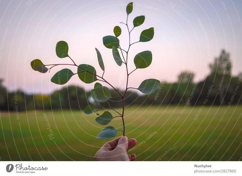 Hand haltend Blätter in der Frühjahrs- oder Sommersaison schön Sonne Garten Frau Erwachsene Natur Pflanze Himmel Frühling Baum Blume Gras Blatt Wiese frisch