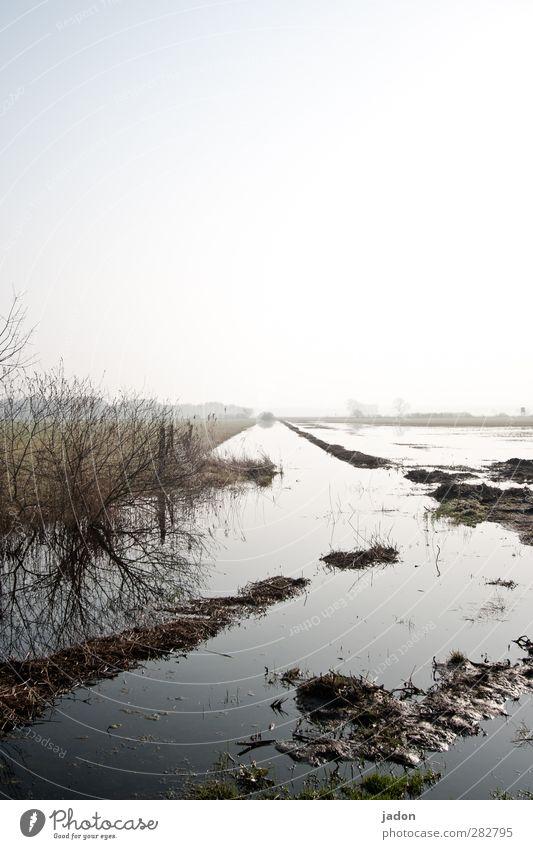 überfluss Umwelt Natur Landschaft Wasser Himmel Wolkenloser Himmel Horizont Sonnenlicht Klimawandel Wetter Unwetter Pflanze Feld Flussufer Moor Sumpf Bach