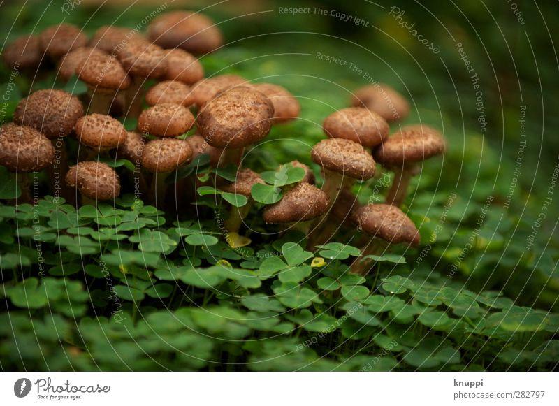 gemeinsam alt werden Umwelt Natur Pflanze Tier Sonnenaufgang Sonnenuntergang Herbst Schönes Wetter Wärme Klee Kleeblatt Park Wald Urwald stehen verblüht