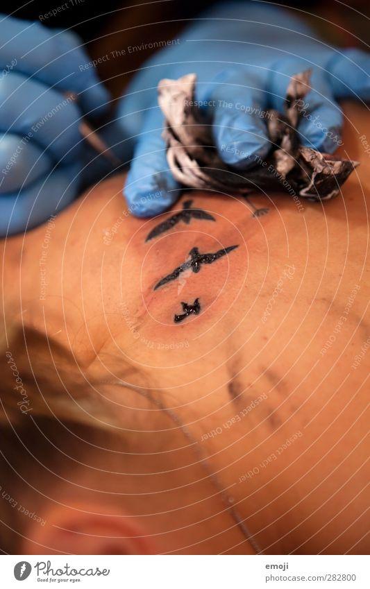 fly away Mensch Jugendliche Erwachsene Junge Frau feminin Vogel 18-30 Jahre außergewöhnlich Haut ästhetisch Tattoo Schwarm Schwalben