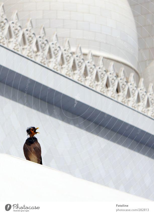 Früher war alles besser | da hatte ich noch Federn... weiß Tier Gebäude hell Vogel natürlich Wildtier schreien Schnabel Moschee