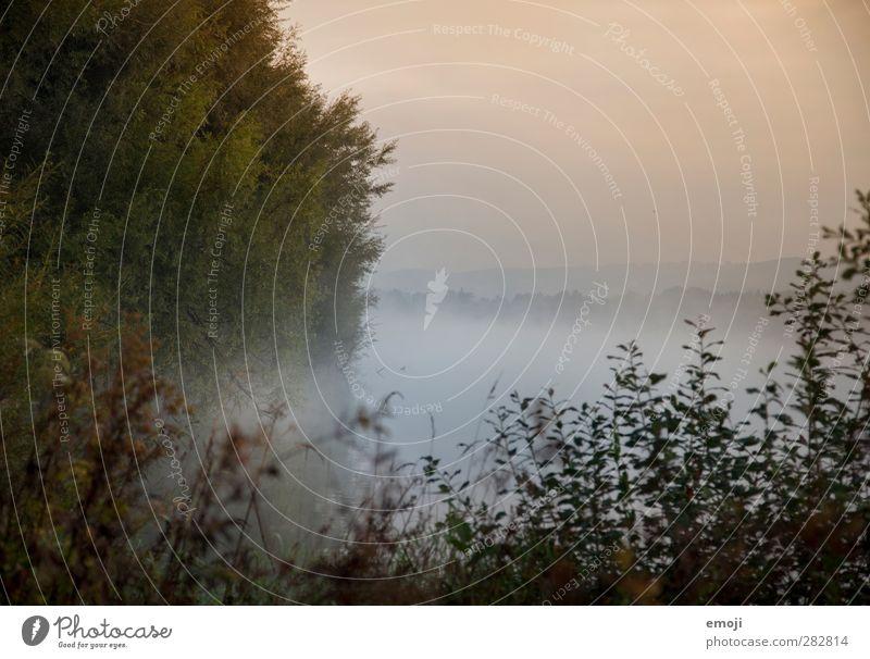 See Umwelt Natur Landschaft Pflanze Herbst Nebel Baum Sträucher Moor Sumpf Teich dunkel gruselig nass mystisch Farbfoto Außenaufnahme Menschenleer Morgen