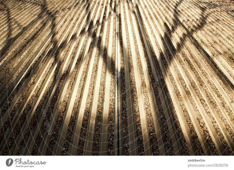 Gleicher Schatten, anderer Winkel Ast Fassade Frühling Fuge Herbst Licht Mauer Menschenleer parallel Perspektive Baumstamm Textfreiraum Wand Beton Zweig Haus