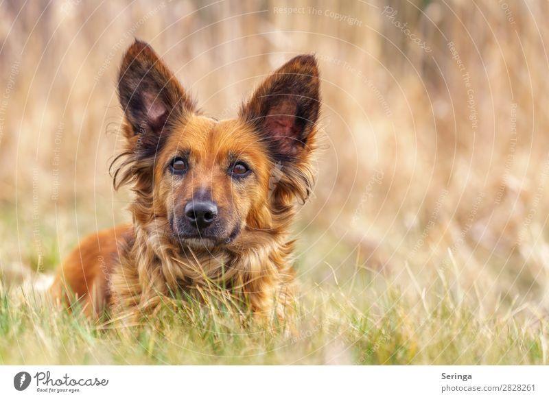 Dackel auf der Wiese Tier Haustier Hund Tiergesicht 1 streichen Hundeschnauze Hundeblick Hundekopf Farbfoto mehrfarbig Außenaufnahme Detailaufnahme Menschenleer