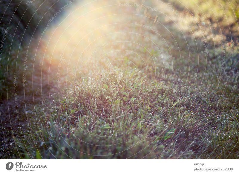 lens flare Umwelt Natur Landschaft Pflanze Sonne Sonnenaufgang Sonnenuntergang Sonnenlicht Schönes Wetter Gras Garten Park Wiese Feld nass natürlich Tau