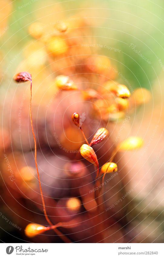 Mikrokosmos Natur Pflanze Tier Blume Gras Moos gelb grün orange rot abstrakt Unschärfe Farbfoto Außenaufnahme Nahaufnahme Detailaufnahme Makroaufnahme