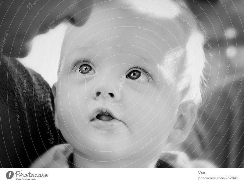 Was will er mir damit sagen? maskulin Baby Familie & Verwandtschaft Kindheit Kopf 2 Mensch 0-12 Monate 30-45 Jahre Erwachsene blond klein Neugier niedlich Blick