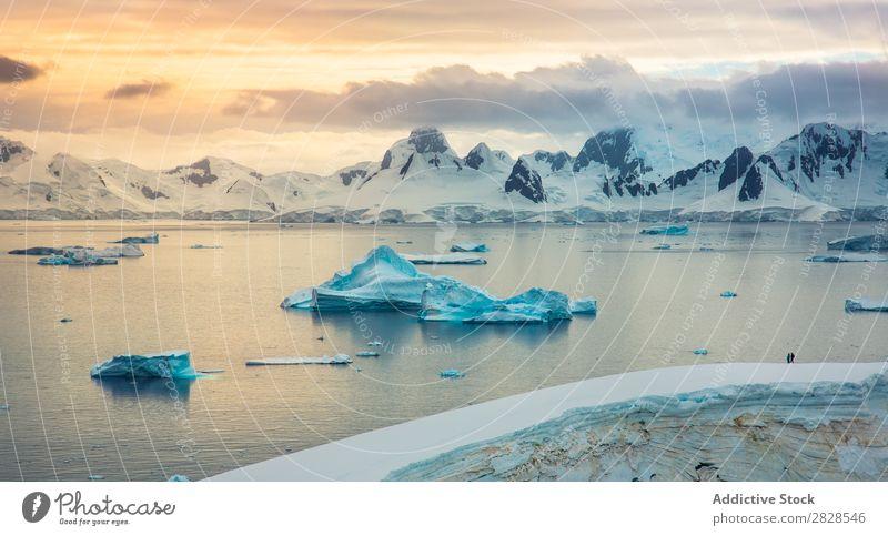 Antarktis Wildnis Naturlandschaft Eis kalt Meer Süden Eisberg Schnee Erwärmung Tierwelt polar Klima Vogel Pinguin Kolonie Außenaufnahme weiß Bucht Landschaft
