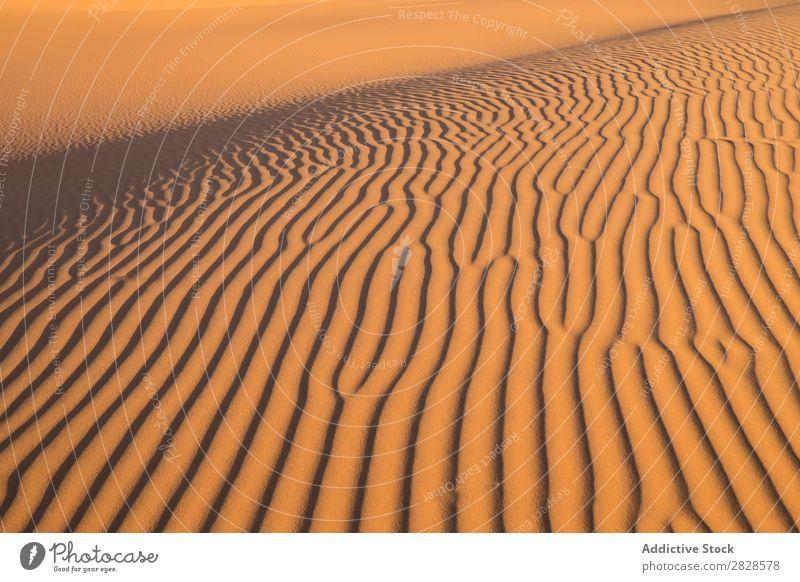 Welliger Sandhügel Hügel Wüste Wellen Sonnenuntergang Natur Sommer regenarm