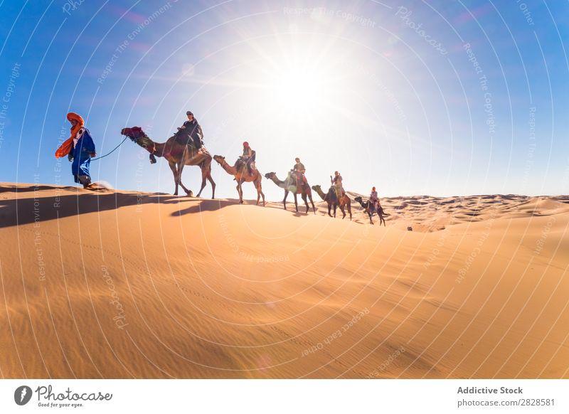 Kamelkaskade in der Wüste Karavane Ferien & Urlaub & Reisen Sand Düne Unendlichkeit Horizont