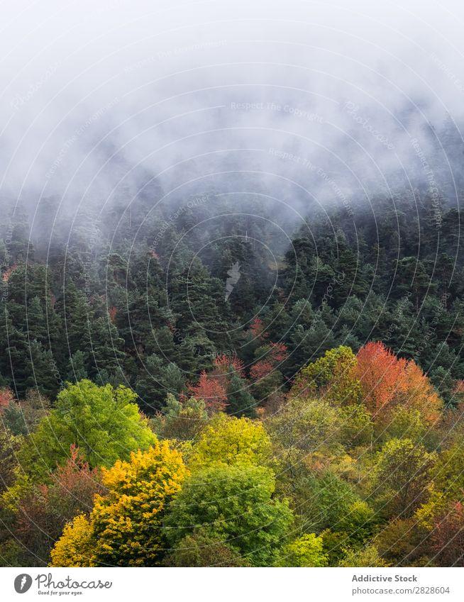Nebliger Herbstwald Wald Nebel Immergrün Landschaft Natur