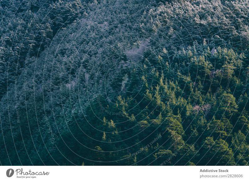 Schneebedeckter Berg mit Wald Natur Winter Berge u. Gebirge grün weiß Landschaft Ferien & Urlaub & Reisen Himmel Eis schön Jahreszeiten kalt gefroren Frost
