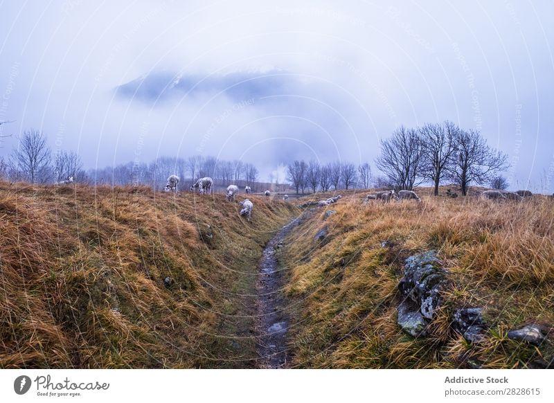 Schafweide bei bewölktem Himmel Weide Feld Pyrenäen Spanien Gras regenarm Bauernhof Landschaft Wiese Herbst Wolken Natur ländlich Tier Landwirtschaft Sommer