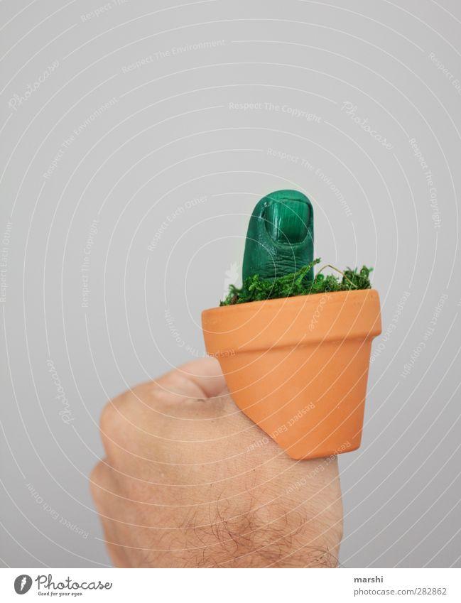 der grüne Daumen Mensch maskulin Finger Natur Pflanze Blume Blumentopf Gärtner Gärtnerei Grüner Daumen Gartenarbeit Präsentation Faust Handwerk Farbfoto
