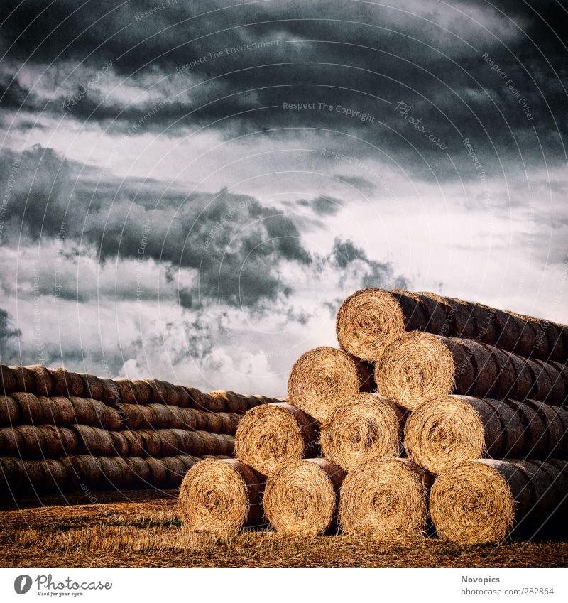 Army of Straw Bales Sommer Landwirtschaft Forstwirtschaft Natur Landschaft Himmel Wolken Herbst Wetter Unwetter Nutzpflanze Feld Linie füttern dehydrieren