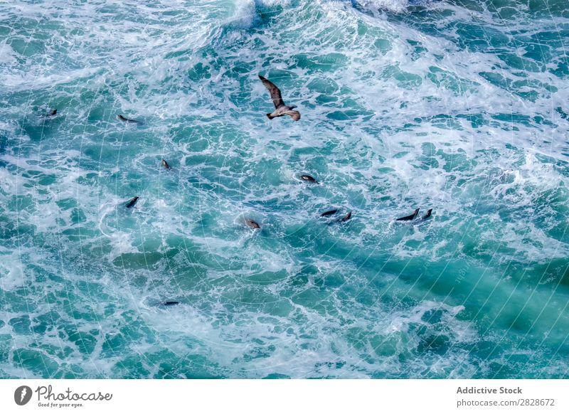 Meereslebensräume von oben Tier Schwimmsport marin Lebensräume Tierwelt Natur wild aquatisch Säugetier Im Wasser treiben Abenteuer Umwelt blau Fauna Fluggerät