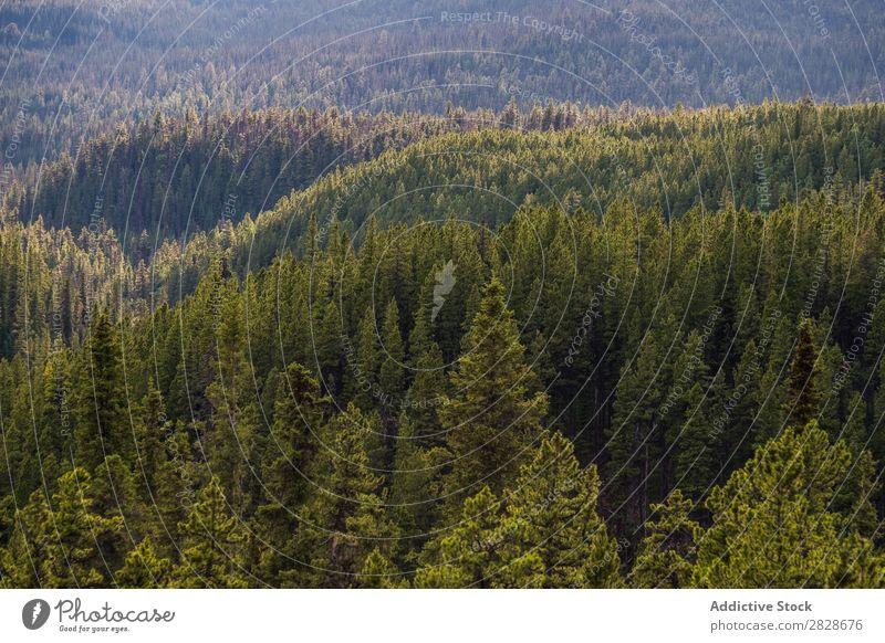 Immergrüner Wald von oben nadelhaltig Baum Oberfläche Landschaft Umwelt Beautyfotografie Tanne Wildnis abstrakt ruhig natürlich Idylle Szene üppig (Wuchs)