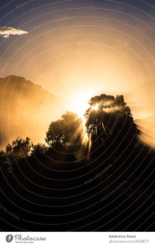 Silhouette der Bäume bei Nebel und Sonnenlicht Baum Mysterium Morgen Mittelgebirge Sonnenaufgang Landschaft Licht Umwelt Sommer Natur Wald mehrfarbig ländlich
