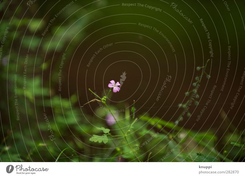 Flora Natur grün schön Sommer Pflanze Blatt schwarz Wald Umwelt Wiese Wärme Leben klein Blüte natürlich rosa