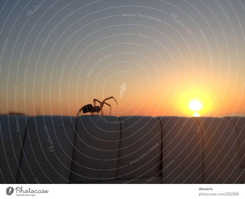 Spinne am Abend... Himmel Natur schön Sommer Sonne Strand Tier Landschaft gelb Bewegung Küste braun Stimmung außergewöhnlich orange Sex