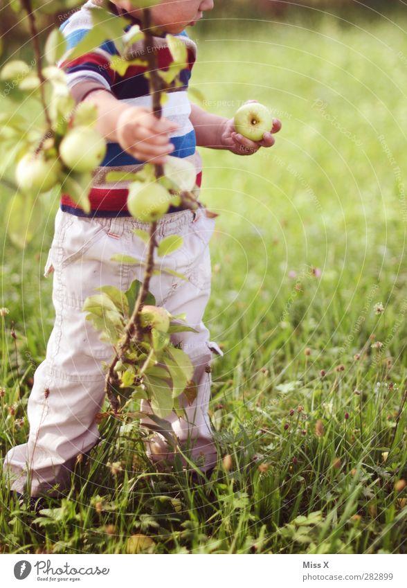Apfelfips Lebensmittel Ernährung Bioprodukte Vegetarische Ernährung Mensch Kind Kleinkind Kindheit 1 1-3 Jahre 3-8 Jahre Natur Sommer Herbst Baum Gras Garten