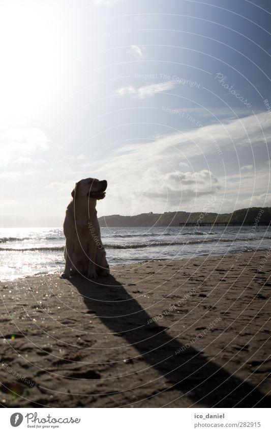 Langer Schatten Natur Landschaft Sonne Sonnenaufgang Sonnenuntergang Wellen Küste Strand Tier Haustier Hund 1 sitzen Coolness Zufriedenheit Labrador Farbfoto