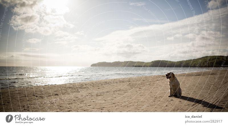 Wann darf ich ... Freizeit & Hobby Ferien & Urlaub & Reisen Ausflug Sand Wasser Schönes Wetter Küste Strand Tier Haustier Hund 1 sitzen gelb Freude Vorfreude