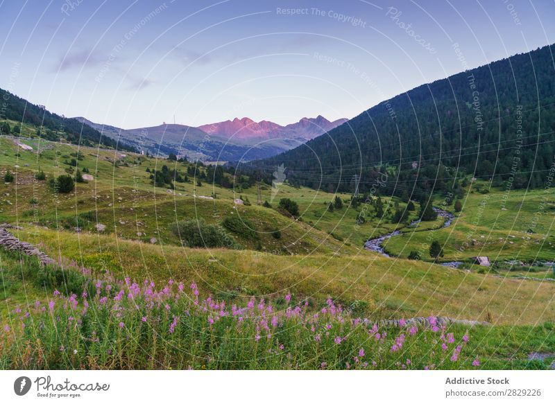 Wunderschöner Naturblick Tal Hügel Blume Wiese Landschaft Berge u. Gebirge Ferien & Urlaub & Reisen Wald Umwelt Aussicht Tourismus grün Wolken Beautyfotografie