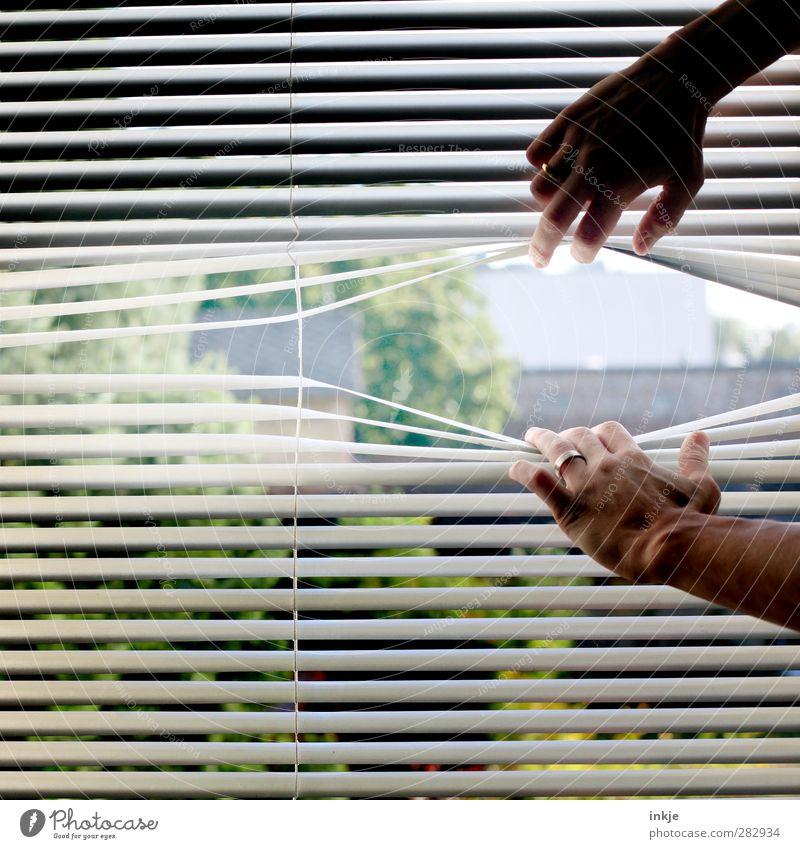 Raus hier! Mensch Hand Fenster Gefühle Garten Linie Stimmung Häusliches Leben Streifen Neugier Schutz festhalten geheimnisvoll entdecken Innerhalb (Position) Kontrolle