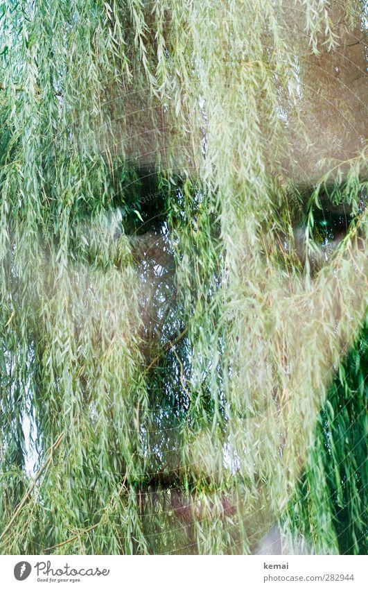 Ich kann dadurch klarer sehen Mensch feminin Erwachsene Leben Kopf Gesicht Auge Mund 1 30-45 Jahre Natur Baum Blatt Grünpflanze Weide hängen Blick Gefühle