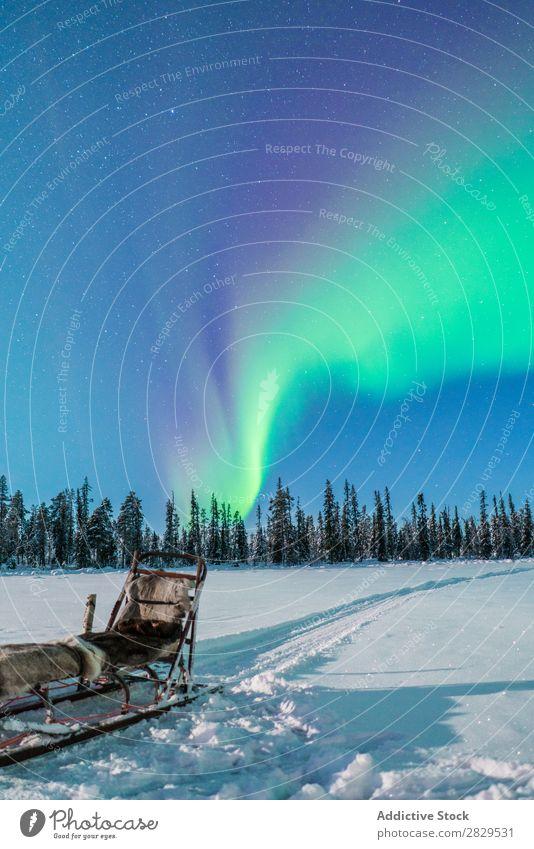 Schlitten im Winterwald Natur kalt Norden Polarlicht Wald Nacht Himmel sternenklar bedeckt Schnee Jahreszeiten weiß Landschaft Eis Frost