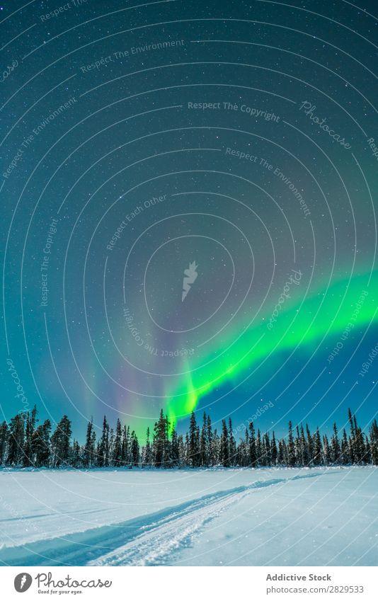 Winterwälder und Polarlicht Natur kalt Norden bedeckt Wald Nacht Abend Schnee Jahreszeiten weiß Landschaft Eis Frost Ferien & Urlaub & Reisen Berge u. Gebirge