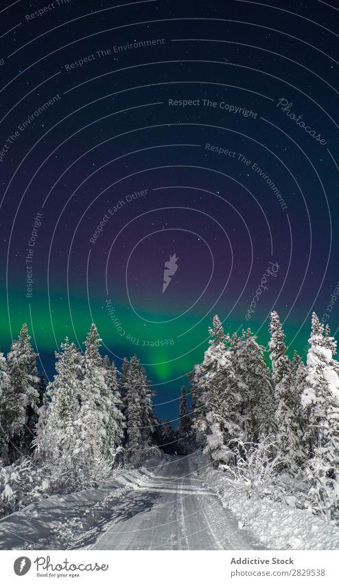 Straße im verschneiten Wald Winter Natur kalt Norden Nacht Polarlicht bedeckt Schnee Jahreszeiten weiß Landschaft Eis Frost Ferien & Urlaub & Reisen