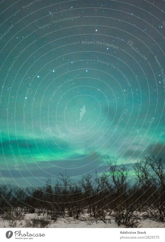 Nördliche Wälder bei Nacht Winter Natur kalt Norden Wald Polarlicht Stern Himmel Abenddämmerung bedeckt Schnee Jahreszeiten weiß Landschaft Eis Frost