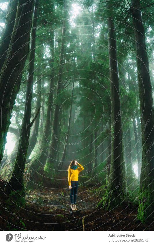 Frau schaut weg in den Wald. grün hübsch Ferien & Urlaub & Reisen Tourismus Einsamkeit Natur Landschaft Baum Rüssel Pflanze Park Jahreszeiten Nebel Umwelt Szene
