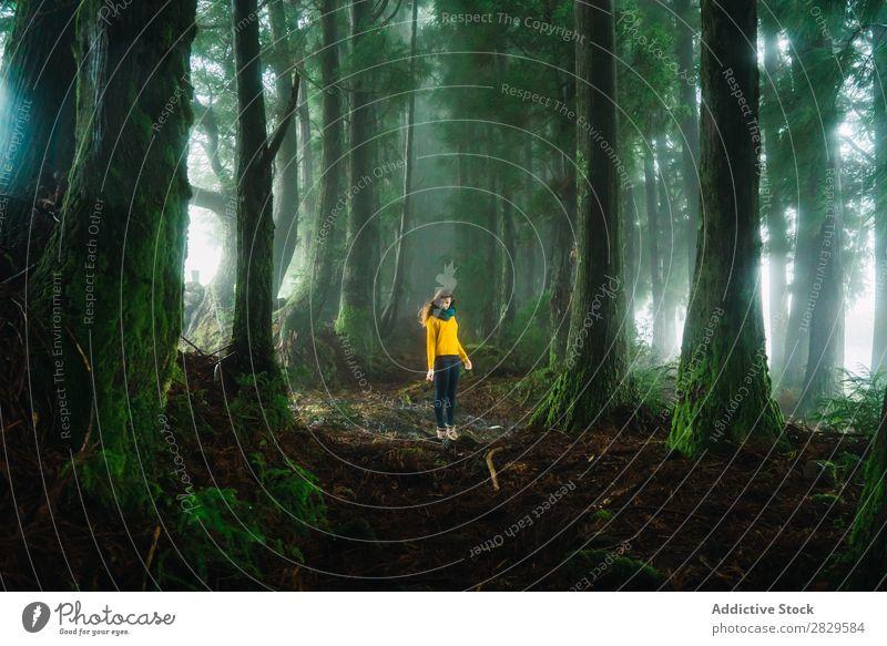 Frau, die im Wald nach unten schaut. grün hübsch Ferien & Urlaub & Reisen Tourismus Einsamkeit Natur Landschaft Baum Rüssel Pflanze Park Jahreszeiten Nebel