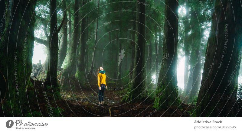 Frau, die im Wald aufschaut. grün hübsch Ferien & Urlaub & Reisen Tourismus Einsamkeit Natur Landschaft Baum Rüssel Pflanze Park Jahreszeiten Nebel Umwelt Szene
