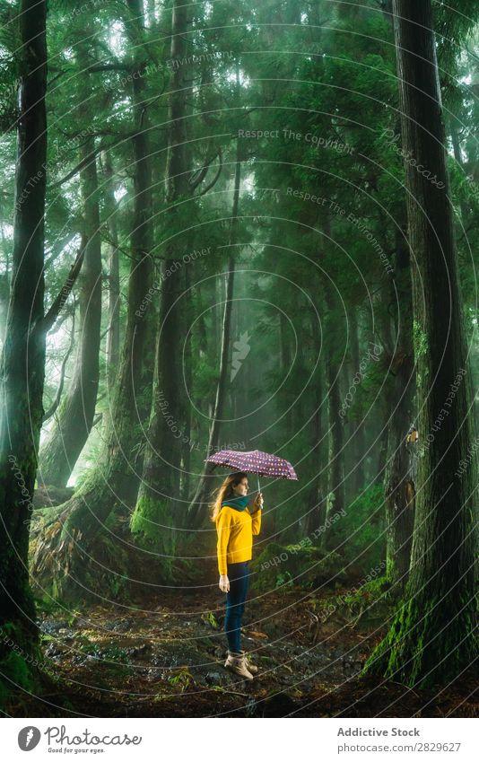 Frau mit Regenschirm im windigen Wald grün Wind laufen hübsch Ferien & Urlaub & Reisen Tourismus Einsamkeit Natur Landschaft Baum Rüssel Pflanze Park