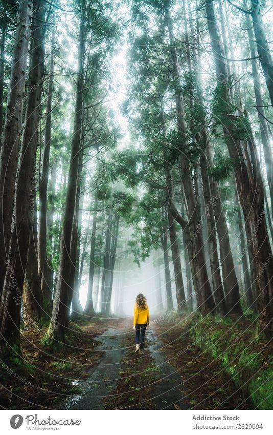Frau beim Spaziergang im Wald grün hübsch Ferien & Urlaub & Reisen Tourismus Einsamkeit Natur Landschaft Baum Rüssel Pflanze Park Jahreszeiten Nebel Umwelt