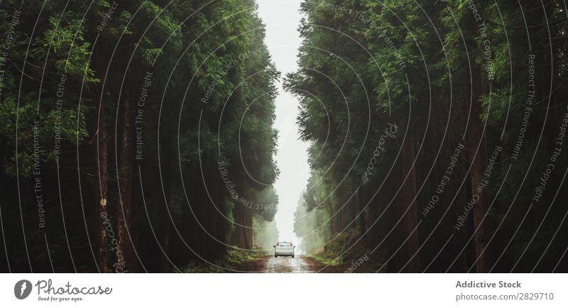 Üppig grüne Wälder mit Auto auf der Straße Wald PKW üppig (Wuchs) Natur ländlich geheimnisvoll Zauberei u. Magie Landschaft Autoreise Szene Perspektive riesig