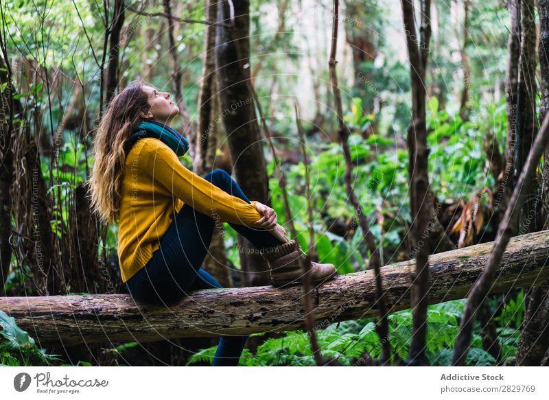Frau auf Stamm im Wald sitzend träumen Fürsorge Rüssel aufschauend grün hübsch Ferien & Urlaub & Reisen Tourismus Einsamkeit Natur Landschaft Baum Pflanze Park