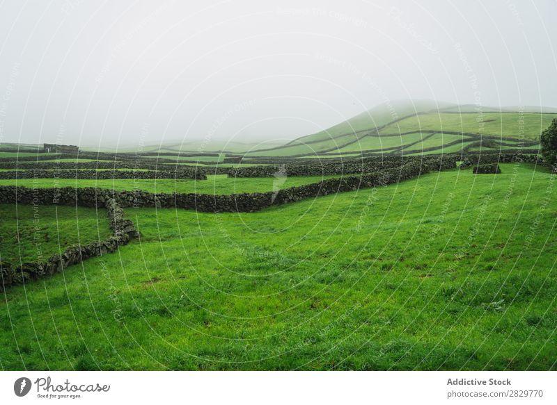 Grünes nebliges Feld mit Zaun grün Aussicht Natur Landschaft Stein Nebel Gras Wiese ländlich Wolken Jahreszeiten Umwelt Szene schön Landwirtschaft Länder
