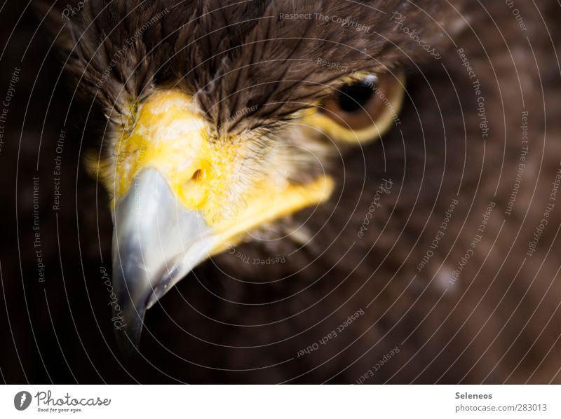 gute Sicht Freiheit Auge Umwelt Natur Tier Wildtier Vogel Tiergesicht Schnabel Feder gefiedert 1 ästhetisch bedrohlich nah natürlich Farbfoto Außenaufnahme Tag