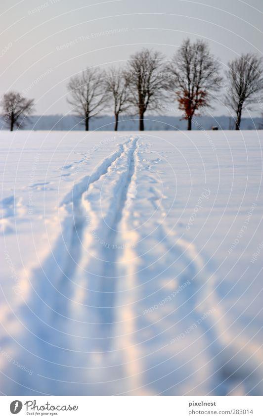 Der Weg ist das Ziel weiß Baum Erholung Winter kalt Schnee Sport Ziel Skifahren Spuren Schneelandschaft Wintersport spurenlesen Schneespur Skilanglauf wegweisend