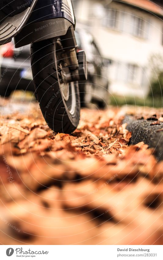 Jahreszeitbedingte Rutschgefahr weiß Blatt schwarz gelb Straße Herbst Wege & Pfade PKW braun orange Verkehr fahren Risiko Verkehrswege Reifenprofil